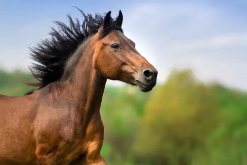検証結果その1「予想は馬主情報が中心」